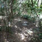 Pycroft's petrel burrows before translocation