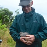 The first fluttering shearwater to hatch on Motuora about to be banded by John Stewart current MRS chair.