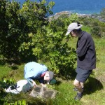 John and Kay inspecting Pycroft's petrel burrow